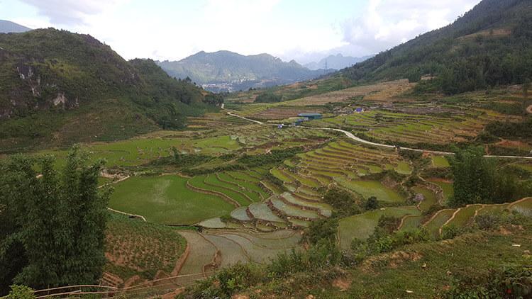 Vietnam - Sapa trekking - rice paddies