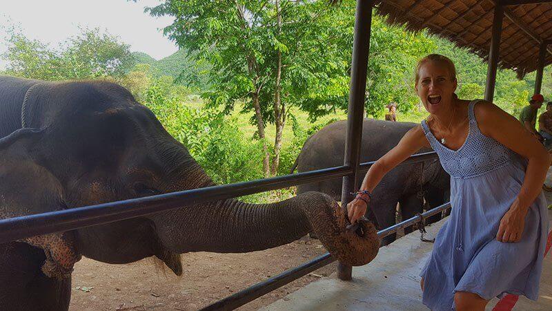 elephant world in Kanchanaburi