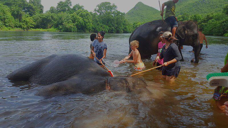 Swimming with elephants - elephant world