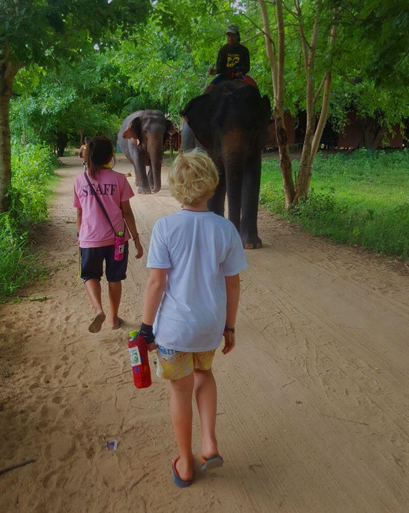 Walking with elephants - Elephant world