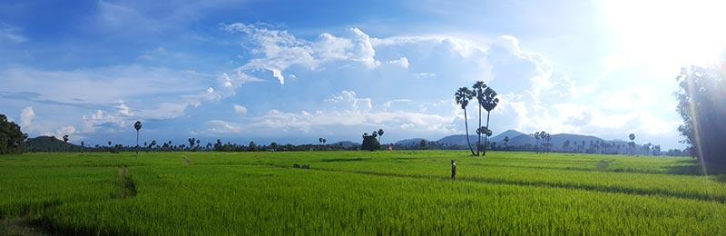 Kampong Chhnang rice paddies