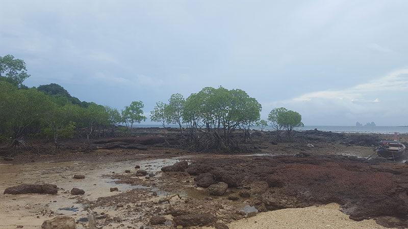 Mangroves on Koh Bulon Le - Thailand
