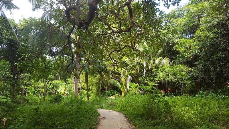 Jungle on Koh Bulon Le - Thailand