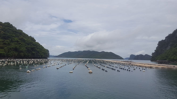 Floating fish farm in Halong Bay