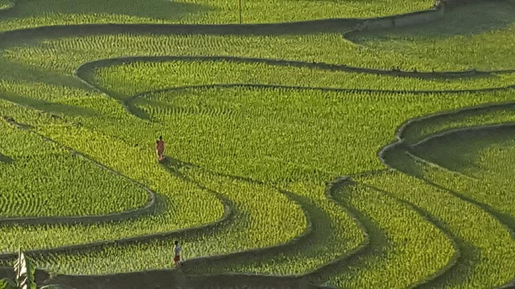 Rice paddies in Sapa, Vietnam - trekking in Sapa