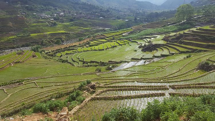 Terraced rice paddies in Sapa Vietnam