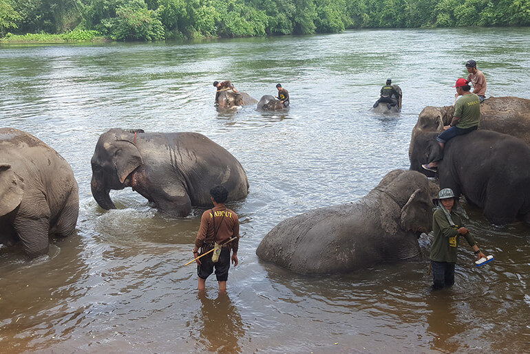 Swimming with elephants at Elephant World in Kanchanaburi in Thailand