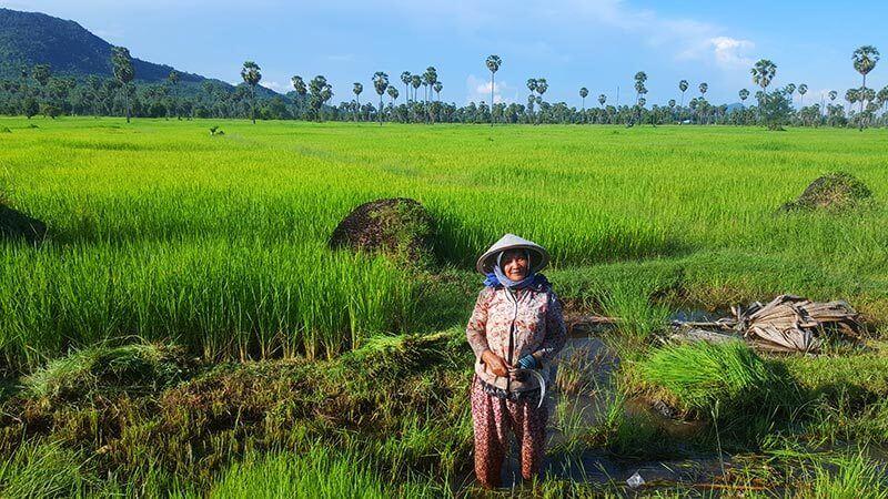 Plamting rice in Kampong Chhnang