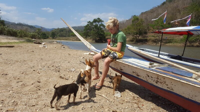 Village dogs on the Kok River boat trip