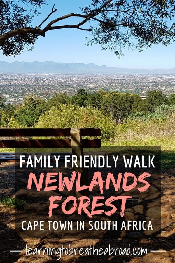 Newlands Forest is on the slopes of Table Mountain in Cape Town South Africa. This is a guide to a family friendly walk in Newlands Forest. Things to do in Cape Town, South Africa. #capetown #southafrica #tablemountain