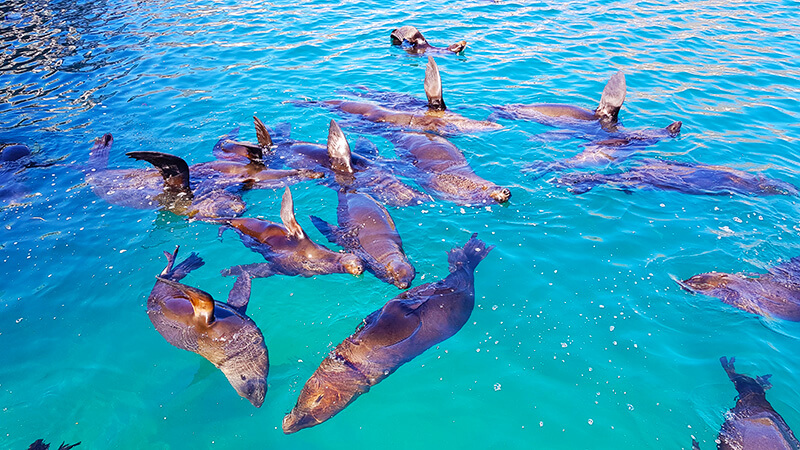 Things to see in Hout Bay: Feed the seals in Hout bay, Cape Town, South Africa
