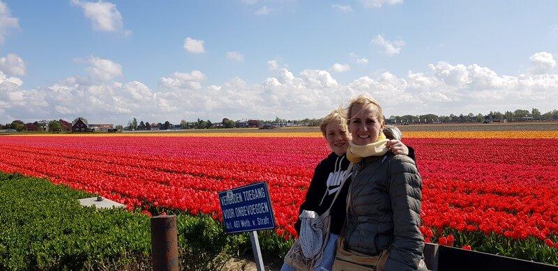 Tulips at keukenhof for free