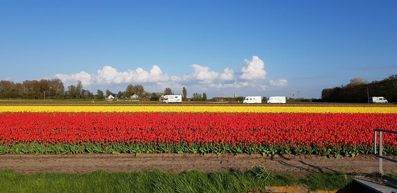 Campervans at keukenhof tulip fields