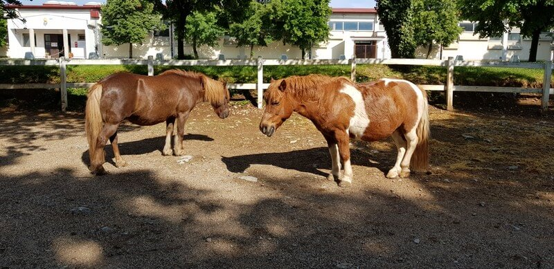 Our favourite things to do in Slovenia's Karst Region: Lippizaner Horses at Lipica Farm