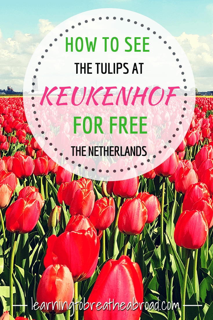 How to see the tulips at the famous Keukenhof Gardens in the Netherlands, for free! Visit the Dutch tulips while they are in bloom | Netherlands Travel | Europe Travel