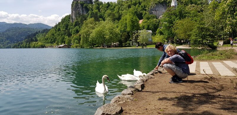 Things to do in Lake Bled: Feed the swans