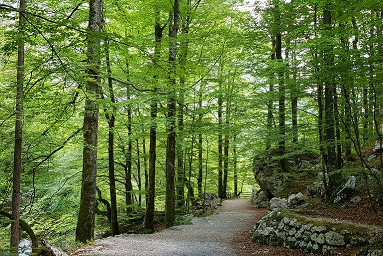 Hiking to Slap Savica Waterfall near Lake Bohinj