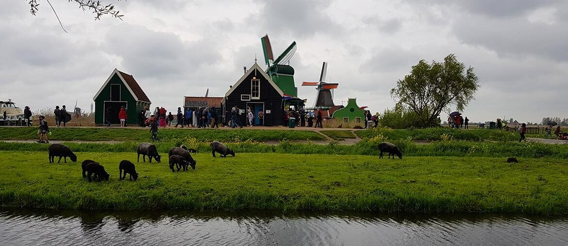 Zaanse Schans old Dutch Village