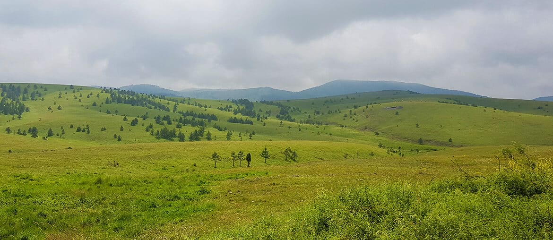 Zasavica to Zlatibor: The kindness of Strangers