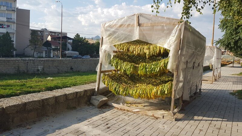 Travel Guide Krusevo: Tobacco out to dry