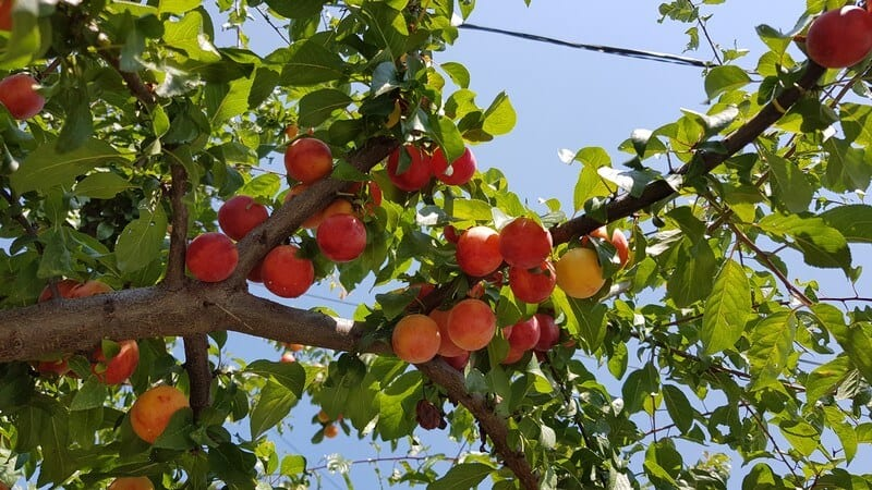 Travel Guide Krusevo: Low hanging fruit