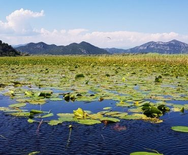 Lake Skadar National Park: Boat Trips and Bird Watching