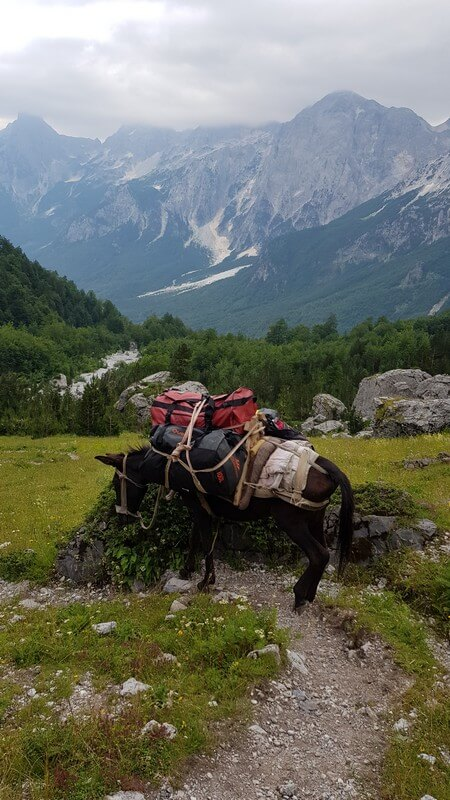 Valbone to Thethi hike: packing horses