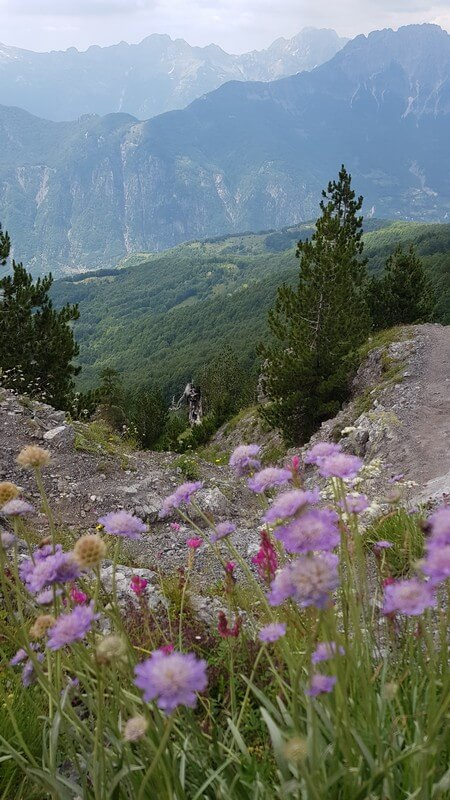 Valbone to Thethi hike: Flowers and Mountains