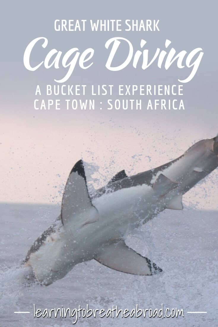 Great White Shark Cage Diving - A Bucket List Experience in Cape Town South Africa