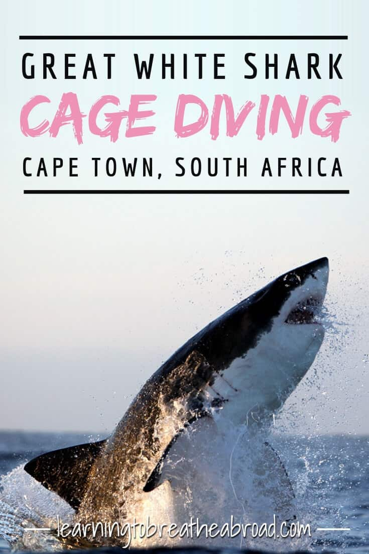 Great White Shark Cage Diving: A Bucket List Experience