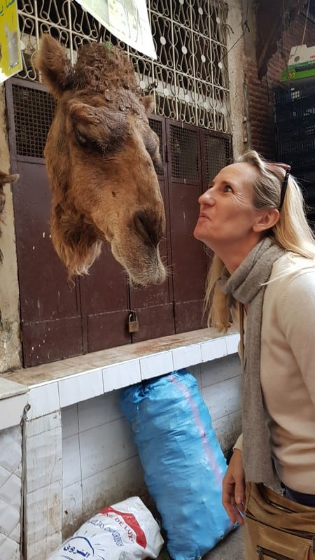 Tour of Fes medina: Kissing camels