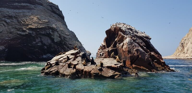 Isla Balestas - seals