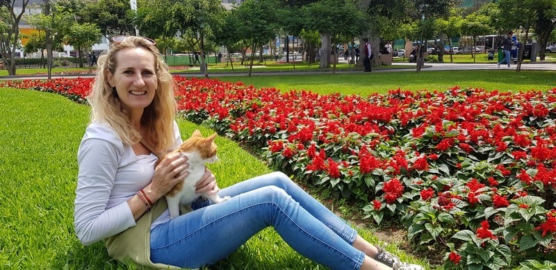Cats in Kennedy Park in Miraflores, Lima, Peru