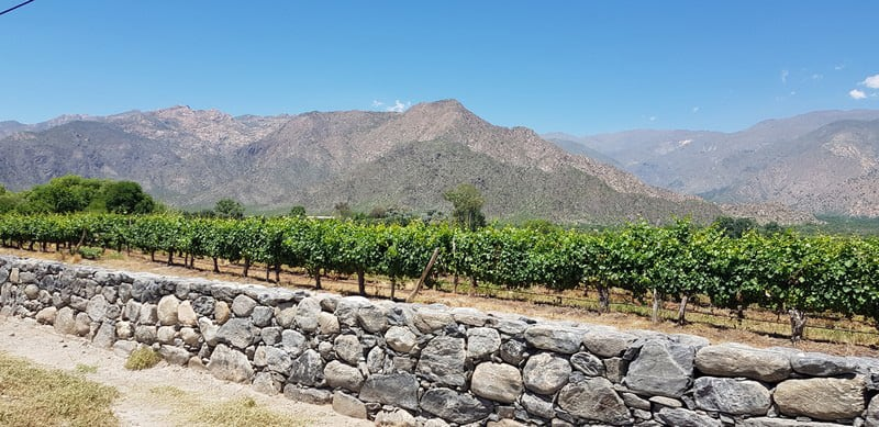 Cafayate vineyards